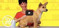Dry Dog Shampoo To The Test