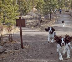 Elk Meadow Dog Off-Leash Area in Jefferson, CO
