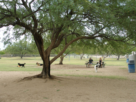 Dog Friendly Parks In Tucson
