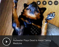 Rottweiler Plays Dead to Avoid Taking Medicine