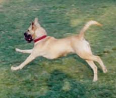 Somerville MA Dog Park