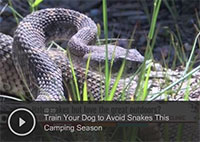 Train Your Dog to Avoid Snakes This Camping Season