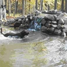 Waterbury Unleashed Dog Park in  Waterbury CT
