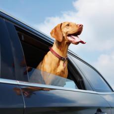 Best Dog-Friendly Vehicles