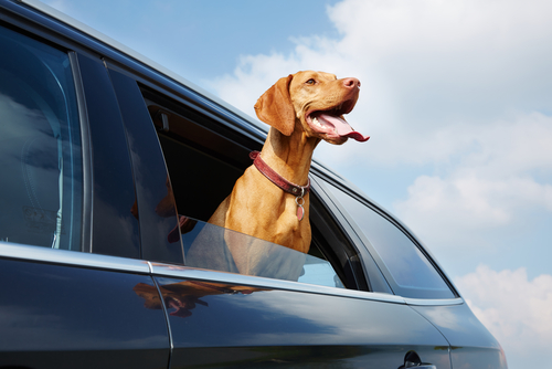 Best Dog-Friendly Vehicles