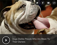 Dogs Dislike People Who Are Mean To Their Owners
