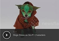 Dogs Dress as Sci-Fi Characters
