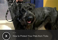 How to Protect Your Pets from Ticks