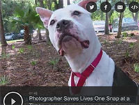 Photographer Saves Dog's Lives One Snap at a Time