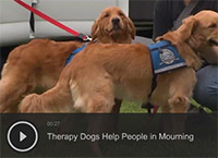 Therapy Dogs Help People in Mourning