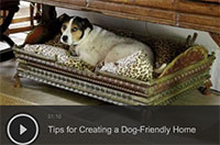 Tips for Creating a Dog-Friendly Home
