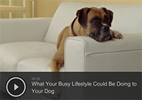 What Your Busy Lifestyle Could Be Doing to Your Dog