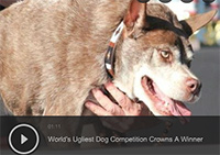 World's Ugliest Dog Competition Crowns A Winner