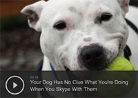 Your Dog Has No Clue What Youre Doing When You Skype