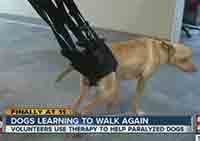 Dogs Learning to Walk Again