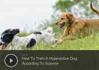 How To Train A Hyperactive Dog