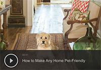How to Make Any Home Pet-Friendly