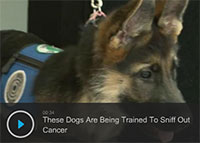 Dogs Are Being Trained To Sniff Out Cancer