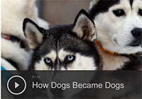How Dogs Became Dogs