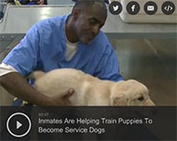 Inmates Are Helping Train Puppies To Become Service Dogs