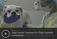 New Cancer Treatment for Dogs Available in Kentucky