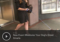 New Exam Measures Your Dog's Street Smarts
