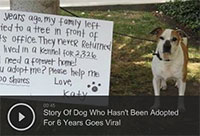 Story Of Dog Who Hasn't Been Adopted For 6 Years Goes Viral