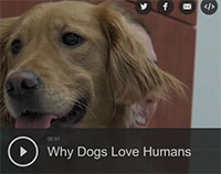 Why Dogs Love Humans