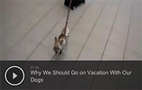 Why We Should Go on Vacation With Our Dogs