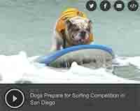 Dogs Prepare for Surfing Competition in San Diego