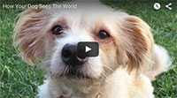 How Your Dog Sees The World