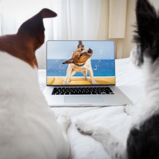 How to Make Your Dog an Internet Star