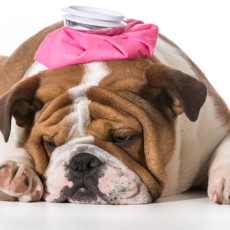 Tips to Care for Your Sick Pets While You are Away