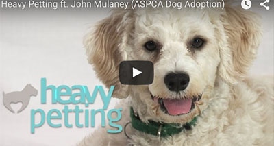 Comedians Help Dogs Get Adopted in Voice-Over
