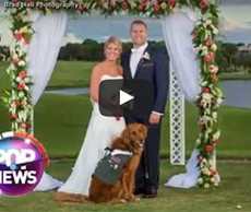 Veteran's Golden Retriever serves as best man at wedding