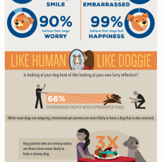 Study Highlights Why Humans Choose Certain Dogs