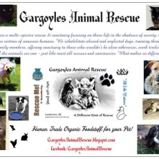 Gargoyles Post Card