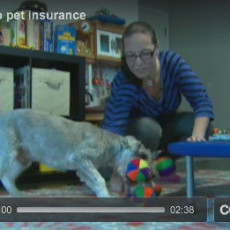 Veterinarian shares recommendations for pet insurance
