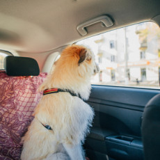 Ways to Travel Safely With Your Dog