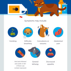 symptons of pet poison from cleaning products