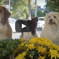 Super Bowl Ads Go To the Dogs