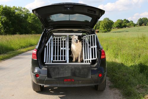 Dog-Friendly Road Trip