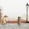 5 Best Cities for Dogs and Their Owners