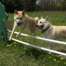 Token Creek County Park Dog Park in DeForest, WI