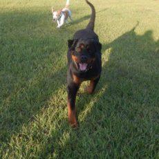 Dog Boarding Deland Florida