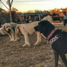 Stones River Dog Park in Nashville TN