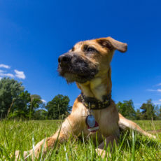 5 Tips to Keep Your Dog Safe from Wild Animals
