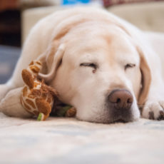 Keep Your Dog Safe While Away: 6 Solutions for Pet Parents