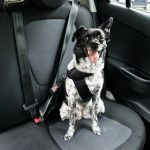 3 Tips to Keep Your Pooch Safe in The Car