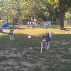 Murphy Memorial Dog Park